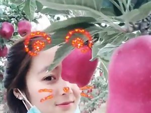 Chinese State instructor students at hand pictures in someone's skin apple orch